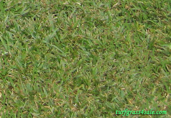 Brokers quality grass carrollton texas